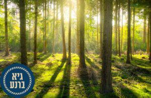 רוצים פרטיות? לכו לגור ביער...